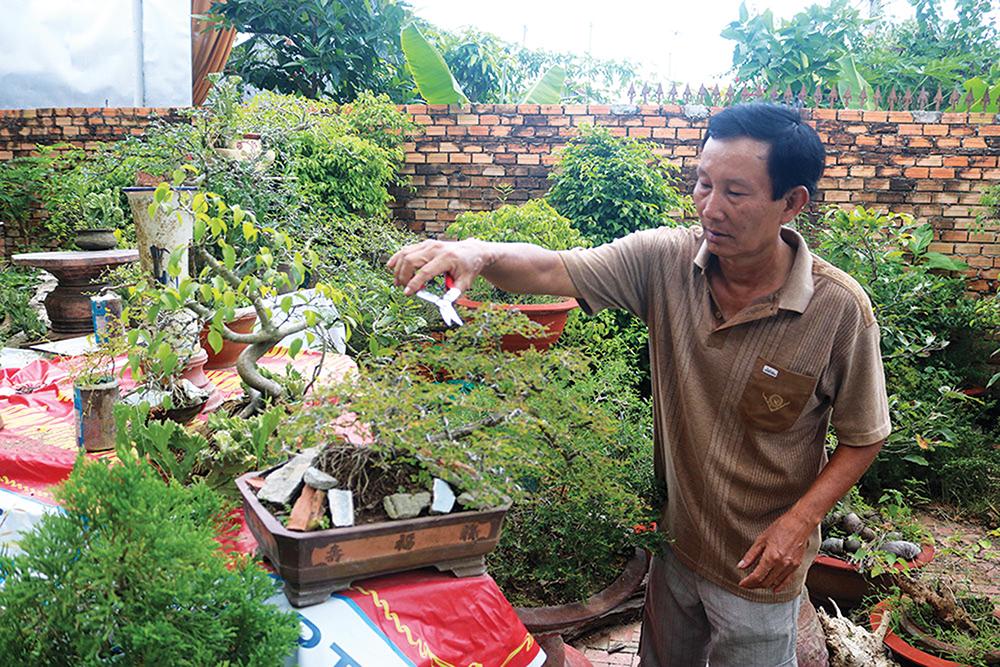 Ông Ghem cẩn thận cắt tỉa cho cây bon sai