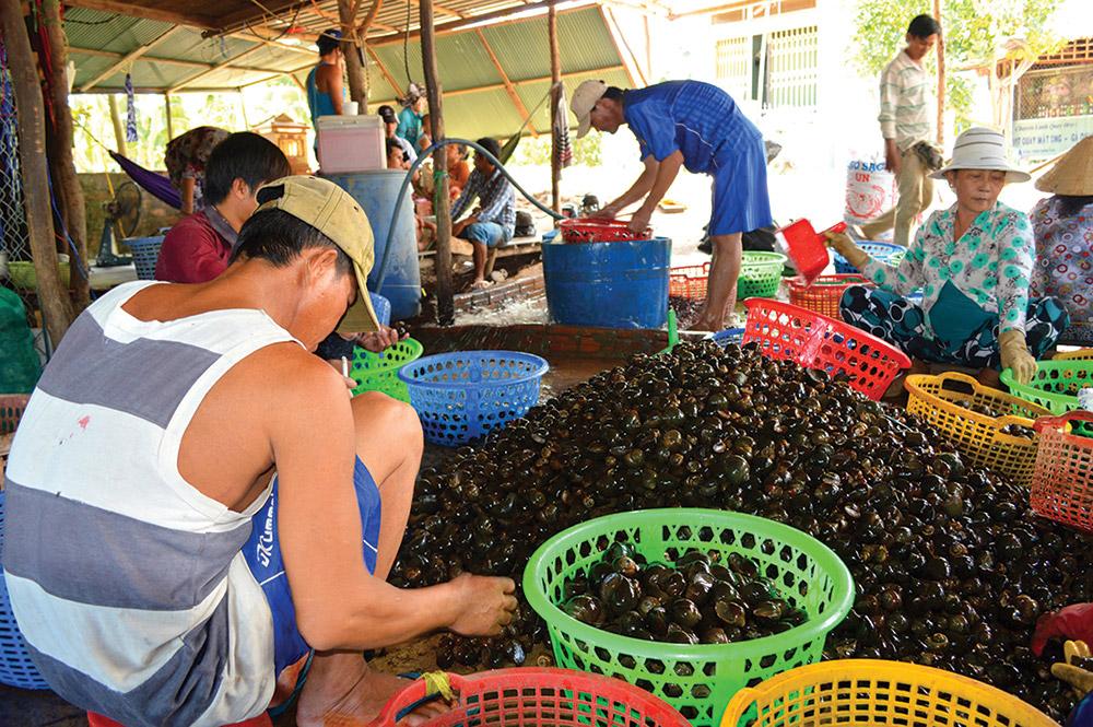 Nhộn nhịp chợ ốc đồng Khánh An