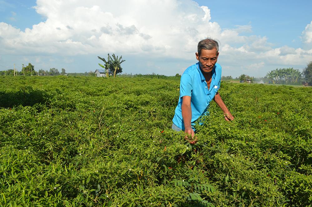 Tăng cường hỗ trợ hội viên, nông dân