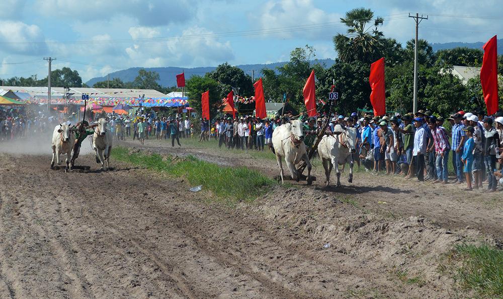Hấp dẫn Giải đua bò tốc độ huyện Tịnh Biên năm 2019