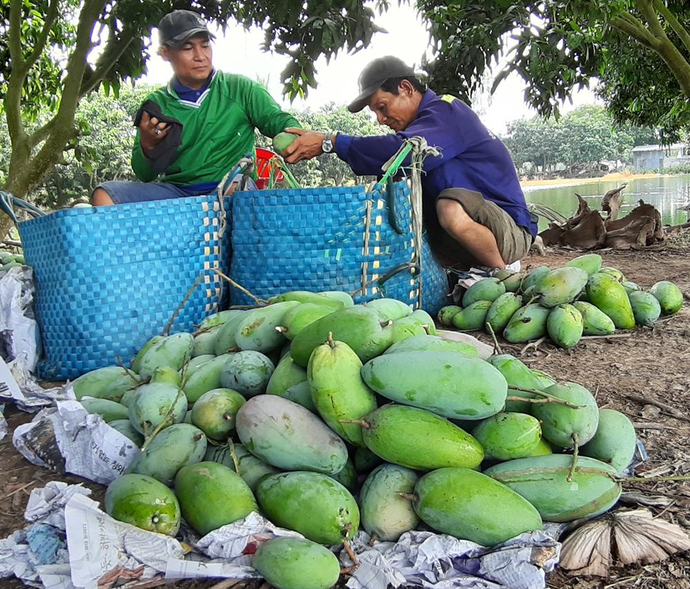 Châu Phú nỗ lực thực hiện nhiệm vụ phát triển kinh tế - xã hội