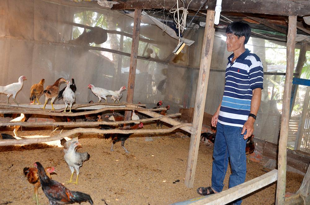 Chuồng gà áp dụng phương pháp nuôi bằng đệm lót sinh học của anh Nghĩa