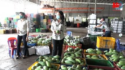 Bí thư Tỉnh ủy Võ Thị Ánh Xuân khảo sát tình hình sản xuất và tiêu thụ nông sản huyện Chợ Mới