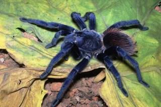 Top 10 loài mới được phát hiện năm 2011