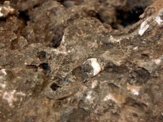 Tìm thấy hoá thạch tổ tiên ban đầu của con người?