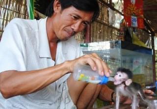 Vương quốc khỉ ở Cà Mau