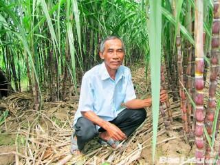 Người dân tộc Khmer vươn lên làm giàu