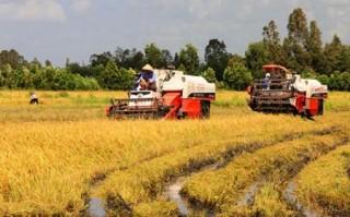 Chiến lược lai tạo lúa cho vùng khó khăn ở ĐBSCL
