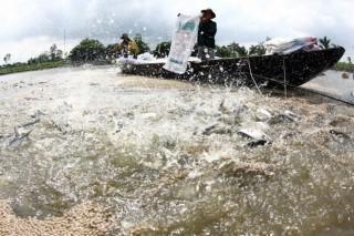 Đồng bằng sông Cửu Long tăng nuôi trồng thủy sản lên 800.000ha