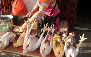 Tràn lan đặc sản gà Đông Tảo từ gà già thải loại