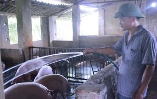 Làm đậu, nuôi lợn thu 300 triệu đồng/năm