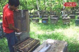 Nuôi ong có hại cho nông nghiệp hay không: Dân bảo có, Cục nói không!