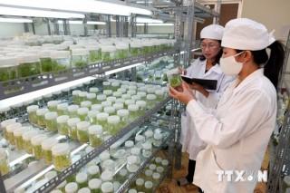 Tái cơ cấu nông nghiệp: Công nghệ là chìa khóa then chốt