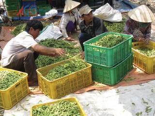 Mở cửa thị trường cho nông sản