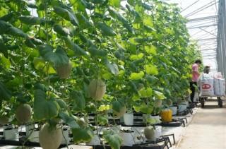 Đẩy mạnh nông nghiệp công nghệ cao