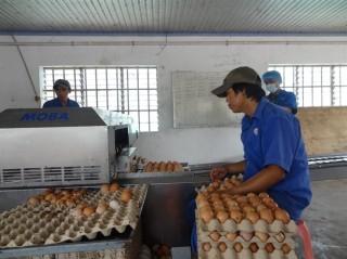 Trứng gia cầm giảm giá
