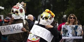 Thực phẩm biến đổi gen có an toàn không?