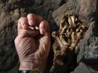 Công bố phát hiện khảo cổ mới về nguồn gốc cụ tổ của loài người