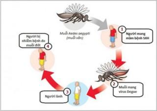 Bệnh sốt xuất huyết đang có diễn biến phức tạp
