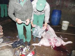 Thịt lợn tiêm thuốc ngủ, ăn vào dễ thần kinh, mục xương