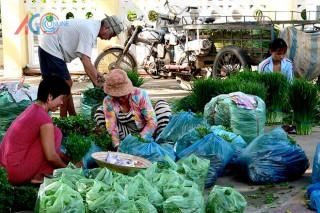 Nông dân Châu Phú sản xuất, kinh doanh giỏi