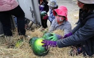 Tiêu thụ nông sản cho nông dân: Đừng mãi hô hào chung chung!