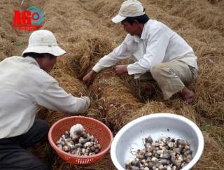 Nông dân Lê Chánh sản xuất giỏi