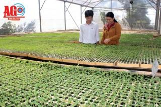 Chợ Mới chuyển dịch cơ cấu cây trồng hiệu quả