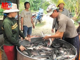 """Hành trình xuất cá nuôi về """"Vương quốc cá"""""""