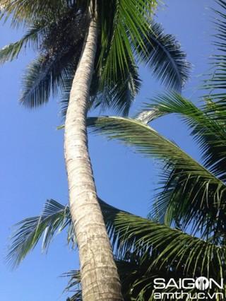 Ngon khó quên củ hũ dừa miền Tây