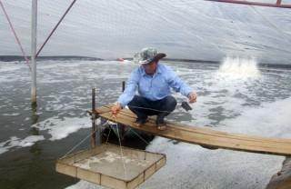 Giải pháp nuôi thủy sản ứng phó hạn, mặn