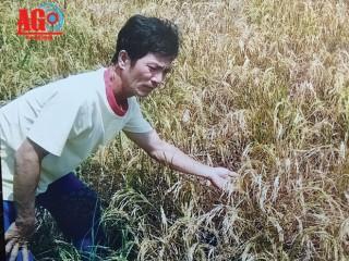 Cần xác định rõ nguyên nhân gây chết lúa, ô nhiễm ao cá của ông Ngô Minh Bạch