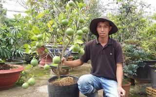 Khởi nghiệp thành công từ trồng cây kiểng dược liệu