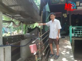 Trang trại nuôi heo gây ô nhiễm môi trường