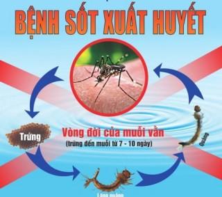 Những hiểu biết sai về sốt xuất huyết khiến bệnh thêm nặng