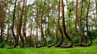 Những khu rừng lạ lùng nếu chưa 1 lần ghé thăm thì thật đáng tiếc
