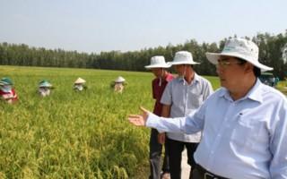 Doanh nghiệp - nông dân: Mấu chốt để phát triển nông nghiệp hàng hóa
