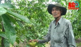 Trồng vườn cây ăn trái kết hợp du lịch