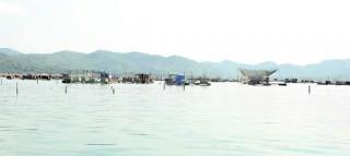 Tôm hùm chết hàng loạt do sốc nước lũ, người nuôi thiệt hại nặng