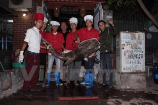 """Cá lăng """"khủng"""" cân nặng 75kg bất ngờ xuất hiện ở Thủ đô"""