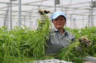 Liên kết để sản xuất nông sản sạch