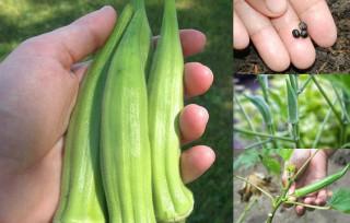 5 loại rau, củ, quả tự trồng được quan tâm nhất năm 2016