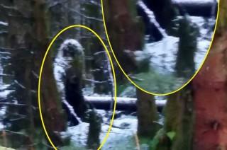 """Phát hiện """"quái vật chân to"""" trong rừng ở Bắc Ailen?"""