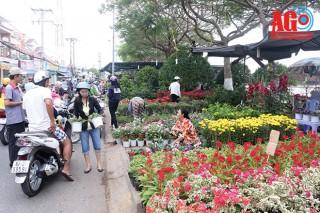 Hoa xuân xuống phố