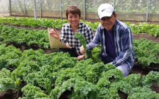 Trang trại rau organic độc đáo dưới chân núi Voi