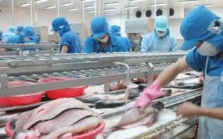 Phản ứng về những thông tin bịa đặt, bôi nhọ cá tra Việt Nam