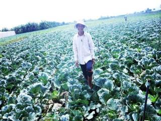 Khám phá vườn rau sạch của những nông dân mê công nghệ cao