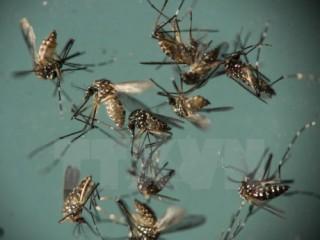Virus Zika ảnh hưởng đến 5% phụ nữ mang thai ở vùng hải ngoại Mỹ