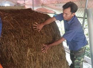 Hiệu quả kinh tế từ trồng nấm rơm trong nhà