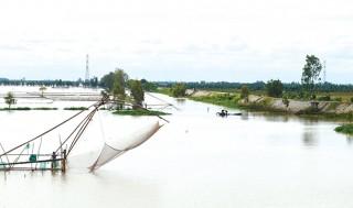 Mùa cá về sông